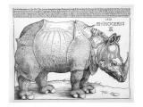 The Rhinoceros, 1515 Giclee Print by Albrecht Dürer