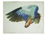 The Right Wing of a Blue Roller Giclee Print by Hans Hoffmann
