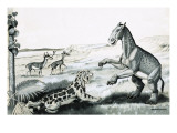 Prehistoric Animals Giclee Print by Helen Haywood