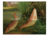 Trout at Winchester Giclee Print by Valentine Thomas Garland