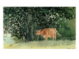 Cow in Pasture, 1878 Giclee Print by Winslow Homer