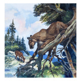 Puma on the Prowl, 1963 Giclee Print by G. W Backhouse