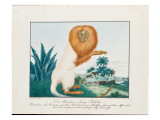 The White Saki, 1835 Giclee Print by Aloys Zotl
