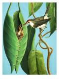 The Tailor Bird, 1970 Giclee Print by R. B. Davis