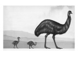 An Emu with Her Chicks Impression giclée par  English School