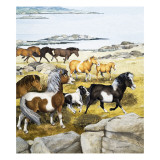 Shetland Ponies, 1970 Giclee Print by Arthur Oxenham