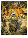 Tiger and Porcupine Giclee Print by Arthur Oxenham