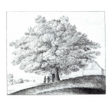 Hollow Tree at Hampstead, 1663 Lámina giclée por Wenceslaus Hollar
