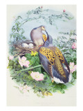 A Pair of Turtle Doves Premium Giclee Print by Edouard Travies