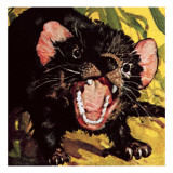 The Tasmanian Devil Reproduction proc&#233;d&#233; gicl&#233;e par English School 