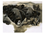 Charging Buffalo Giclee Print by G. W Backhouse