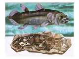Coelacanth and its Fossil Giclee Print by  English School