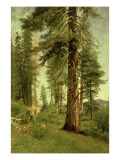 California Redwoods Giclee Print by Albert Bierstadt