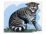 Wild Cat, from 'Treasure', 1966 Giclee Print by R. B. Davis