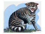 Wild Cat, from 'Treasure', 1966 Giclee Print by R. B. Davis