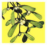Mistletoe Giclee Print by English School