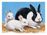 Rabbits Giclee Print by R. B. Davis