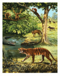 Animals of India Giclee Print by Arthur Oxenham