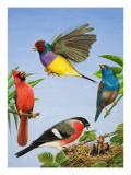 Tropical Birds Giclee Print by R. B. Davis