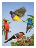 Tropical Birds Giclee Print by R. B. Davis