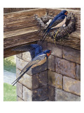 Swallows Giclee Print by  English School
