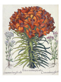 Lily and Centaury Giclee Print by  German School