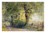 Under the Beeches Giclee Print by John Steeple