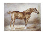 Horse in a Stable Giclee Print by Theodore Gericault
