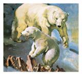 Polar Bear Giclee Print by  McConnell