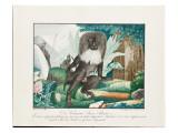 A Macaque, 1837 Giclee Print by Aloys Zotl