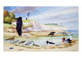 Sea Birds Giclee Print by John Rignall