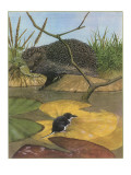 Hedgehog and Vole Giclee Print by  English School