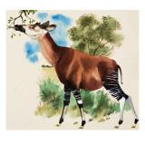 Okapi Giclee Print by Arthur Oxenham