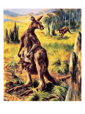 Kangaroo Giclee Print by  English School