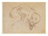 Study of a Dog Giclee Print by  Michelangelo Buonarroti