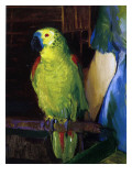 Parrot, 1915 Giclee Print by George Wesley Bellows