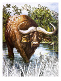 Buffalo Giclee Print by Susan Cartwright