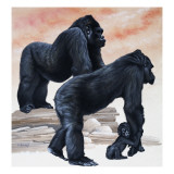 Gorillas Giclee Print by David Nockels