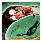 Cormorant Reproduction procédé giclée par English School