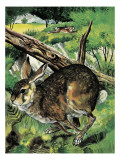 Hare Running Giclee Print by  English School