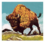 Bison Giclee Print by  English School