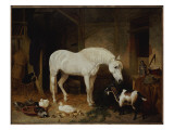 Stable Companions Giclee Print by John Frederick Herring Snr