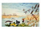 Nature Scene Giclee Print by John Rignall