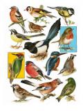 British Birds Reproduction procédé giclée par  English School