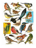 British Birds Giclee Print by  English School