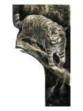 Wild Cat Giclee Print by G. W Backhouse