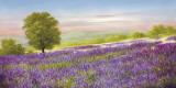 Lavender Field Art by Heinz Schölnhammer