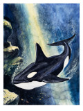 Killer Whale Giclee Print by G. W Backhouse
