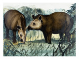 The Tapir Giclee Print by Arthur Oxenham