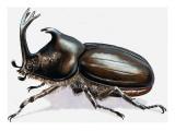 Stag Beetle, 1966 Giclee Print by R. B. Davis